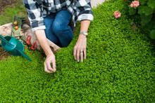 Senior Woman Gardening In Geod...