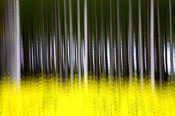 Artistic photograph of a poplar forest in the Villafafila Natural Park. Zamora