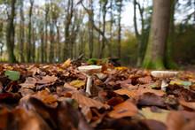 Primeval Dutch Forest On A Sun...