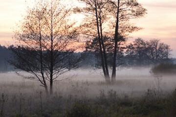 Drzewa w porannej mgle