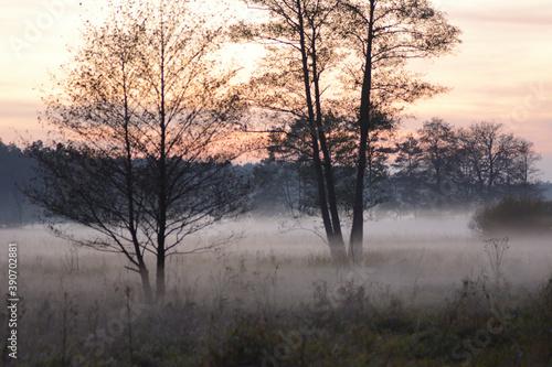 Drzewa w porannej mgle - fototapety na wymiar