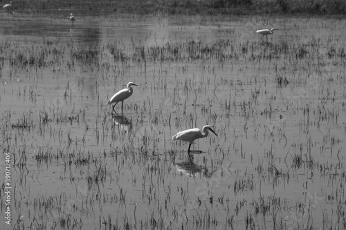 Cuadros en Lienzo wetland with birds