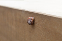 The Snail Stuck To The Wall Af...