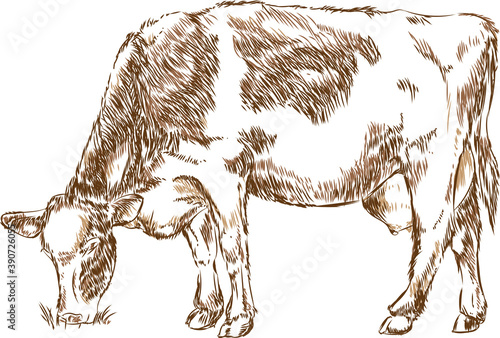 naturalistic cow - line drawing Canvas Print