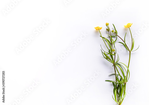 Photo Wildflowers bouquet on white background