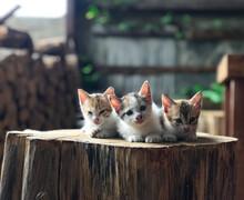 Three Very Cute Kittens Pose O...