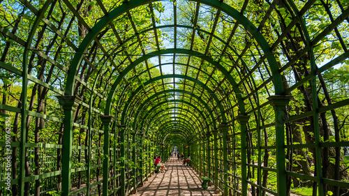 Fototapeta Pergola  zielony-tunel-w-ogrodach-st-petersburg