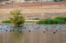 Duck Pond In The San Jacinto W...