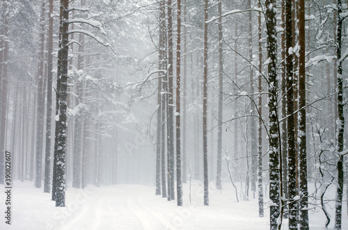 Foto snowfall in the forest