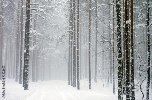 snowfall in the forest Fototapeta