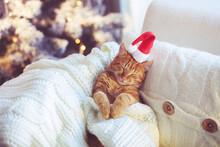Lovable Ginger Cat Wearing San...