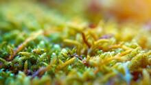 Colorful Moss Vegetation Close...