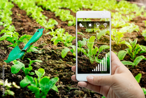 Fotografie, Tablou Smart farming agribusiness and technology