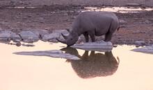A Rhino At Water Hole
