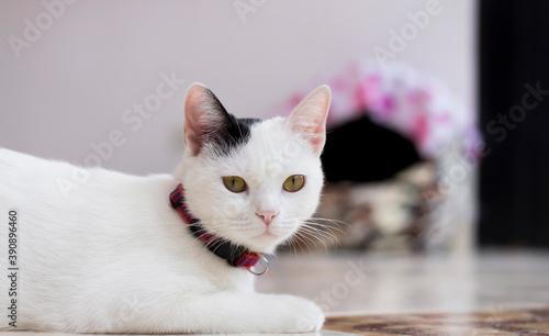 Fényképezés gatos domésticos