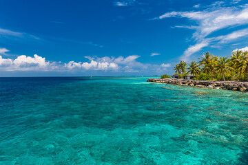 Tropical beach in Maldives with palm trees and vibrant lagoon