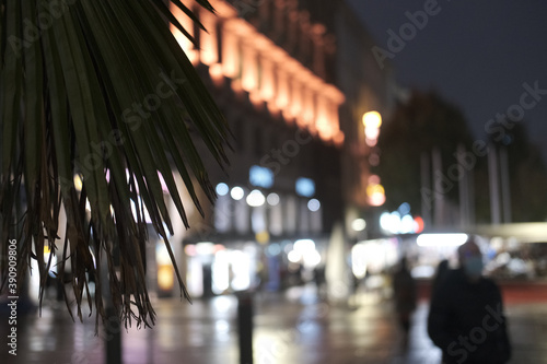 Foto Closeup of a plant on blurred background of city lights