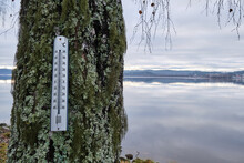 Thermometer On A Tree Covered ...