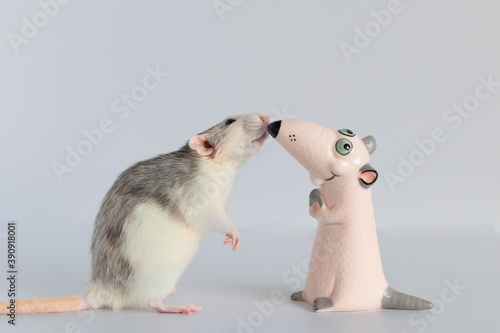 Fotografia, Obraz A cute little decorative rat stands on its hind legs and looks at the toy figurine