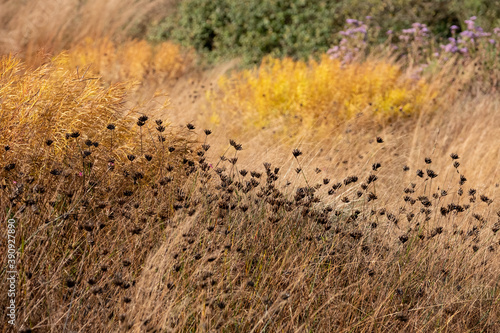 Photo Garden at Hauser & Wirth Gallery named the Oudolf Field, at Durslade Farm, Somerset UK