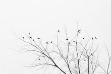 Silhouette D'oiseaux Dans Un A...