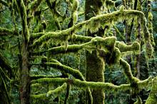 Closeup Shot Of Moss-covered T...