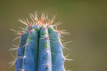 Green Spiky Cactus With Long T...