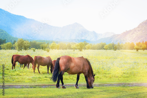 Canvastavla Herd of horses grazes in mountains on sunny day.