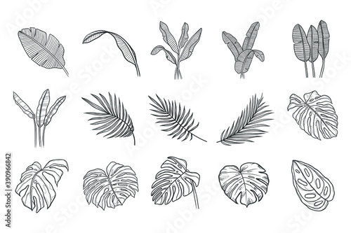 Fototapety, obrazy: Tropical or forest leaves set in black and white sketch style on white background, oval, palmate, paired, pinnate, ovoid type isolated on a white background.
