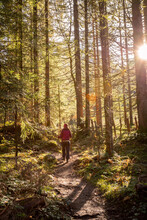 Hiking In The Forest, Autumn Time. Girl In Sportswear, Sunbeams And Warm Color