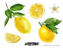 Lemon Fruits With Branch, Slice And Flower Set Watercolor Illustration Isolated On White Background