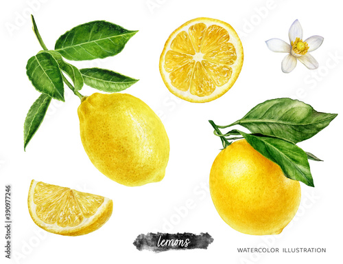 Photo Lemon fruits with branch, slice and flower set watercolor illustration isolated