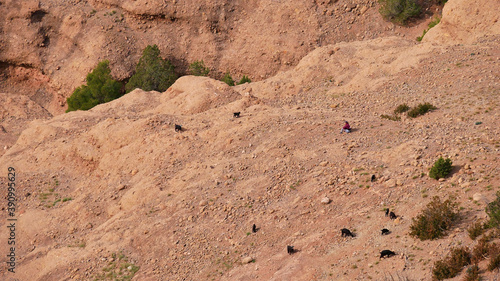 Female goatherd tending a group of black colored goats on a dry slope below popular rock formation cathedrale imsfrane near Tilouguite, Morocco Fototapet