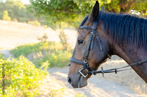 Slika na platnu Horse portrait on a colorful forest background