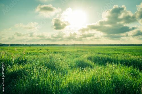 Rice plantation under the sunny sky Canvas