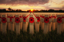 Remembrance Poppies On Wooden Crosses, To Commemorate The Loss Of Servicemen In World Wars And Conflicts.