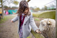 Little Girl Feeding A White Lamb That Sticks Its Snout Out Of A Wire Fence