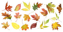 Set Of Different Autumn Leaves On White Background. Banner Design