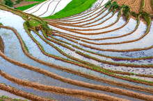 Landscape Of Terraced Rice Pad...