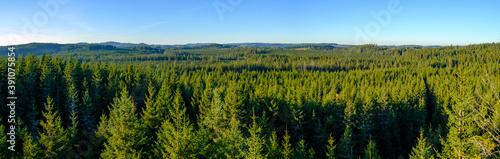 mountain pine (pinus mugo) forest in the upper austrian nature reserve tanner mo Tapéta, Fotótapéta