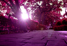 Pop Art Surreal Style Purple C...