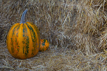Orange Pumpkins On The Straw B...