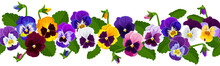 Border Flowers Pansies, Flowers Yellow, Purple, Blue, Lilac, White, Leaves. Seamless Flower Border For Decoration. Vector Image.