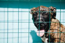 Portrait Of Sad Dog In Shelter