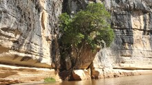 Giant Tree Growing Out Of Cliffside Cave Tsingy De Bemaraha Madagascar