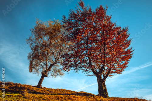 Foto two trees in autumn clothes