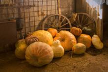 Pumpkins Selection And Wagon W...