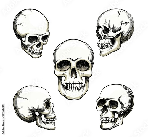 Photo set five different greyscale views naturalistic human skull with teeth illustrat