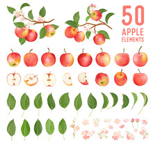 Watercolor Elements Of Apple Fruits, Leaves And Flowers For Posters, Wedding Cards, Summer Boho Banners