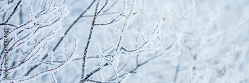 Snow and rime ice on the branches of bushes Canvas